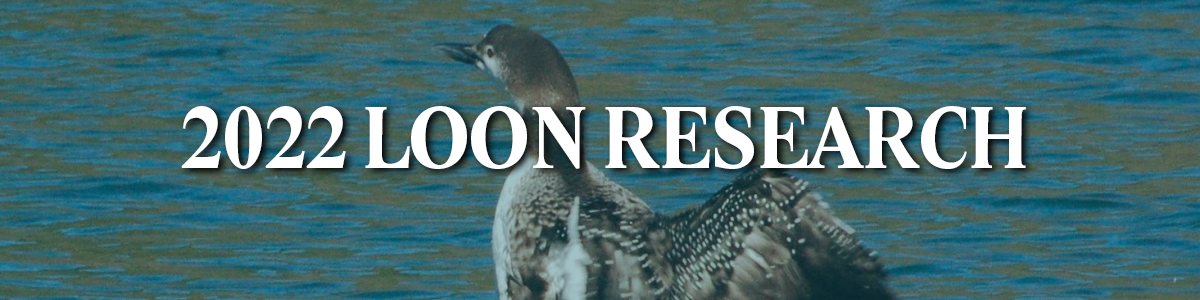 Loon Research